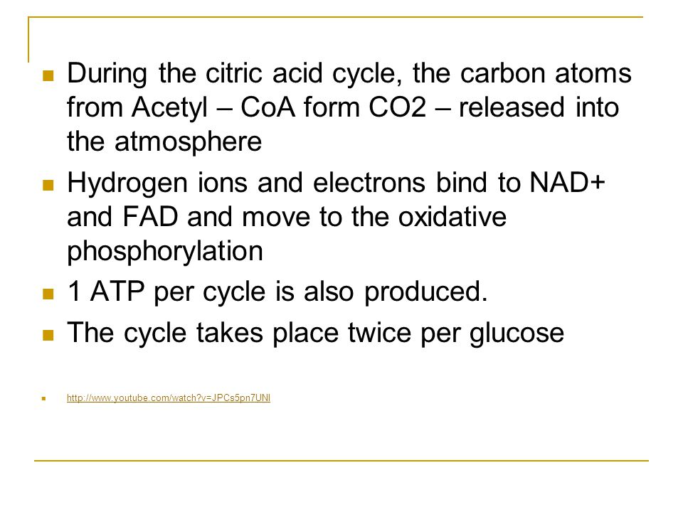 1 ATP per cycle is also produced.