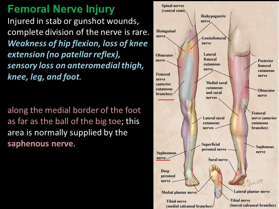 clinical anatomy of lower limb part i - ppt video online download, Muscles