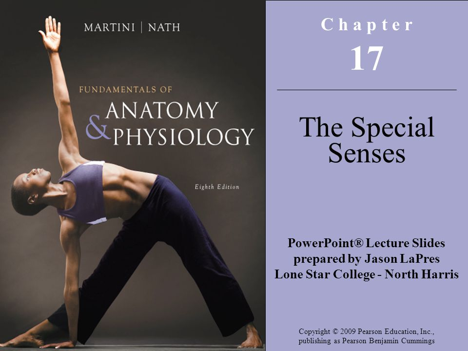 Exercise 23 Special Senses Anatomy Of The Visual System Gallery ...