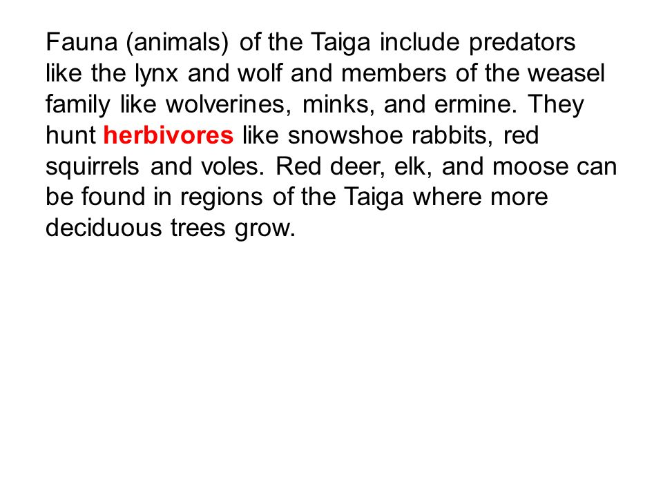 Fauna (animals) of the Taiga include predators like the lynx and wolf and members of the weasel family like wolverines, minks, and ermine.