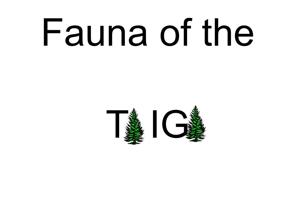 Fauna of the T IG