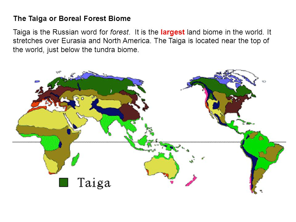 "a report of taiga the largest land biome on earth The coniferous forest biome is south of the arctic tundra it stretches from alaska straight across north america to the atlantic ocean and across eurasia the largest stretch of coniferous forest in the world, circling the earth in the northern hemisphere, is called the ""taiga."