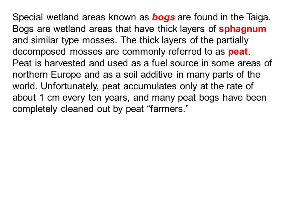 Special wetland areas known as bogs are found in the Taiga