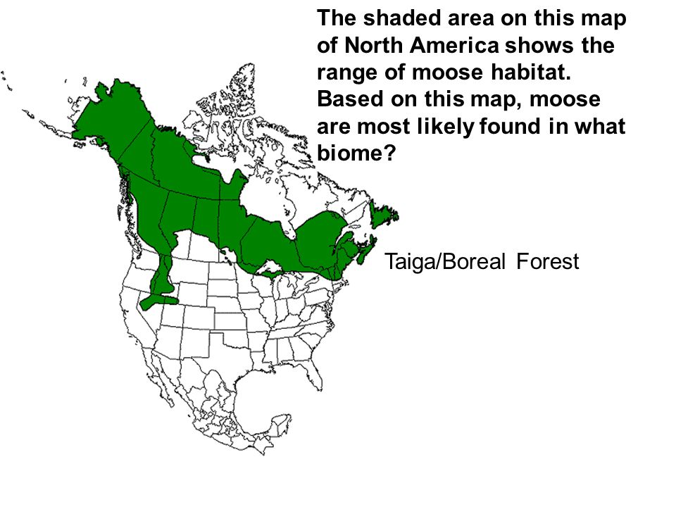 The shaded area on this map of North America shows the range of moose habitat. Based on this map, moose are most likely found in what biome