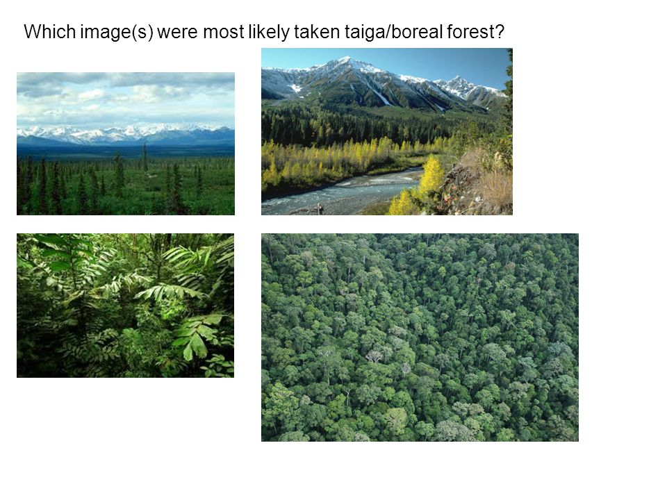 Which image(s) were most likely taken taiga/boreal forest