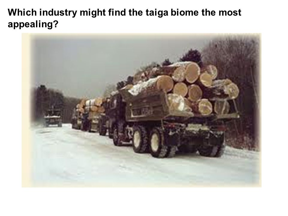 Which industry might find the taiga biome the most appealing