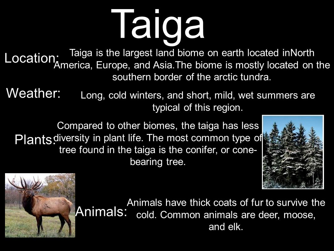 Taiga Location: Weather: Plants: Animals: