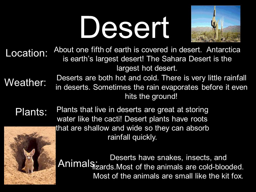 Desert Location: Weather: Plants: Animals:
