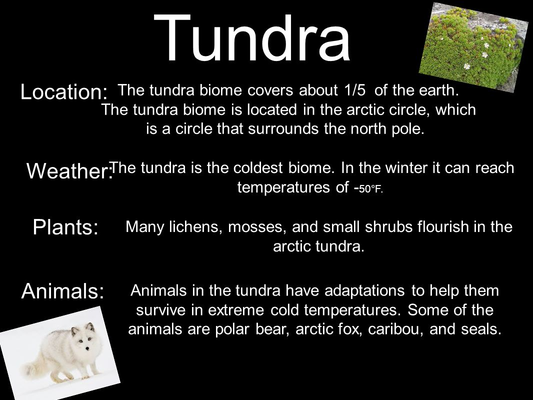 Tundra Location: Weather: Plants: Animals: