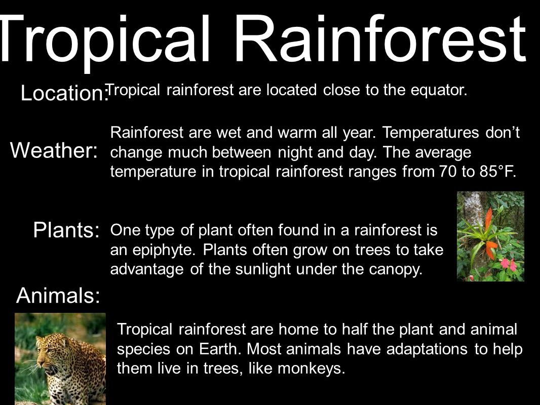 Tropical rainforest are located close to the equator.
