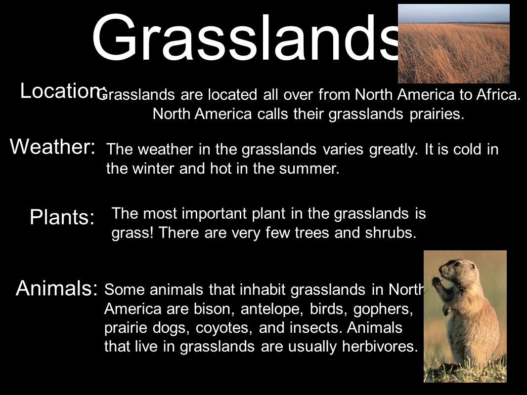 Grasslands Location: Weather: Plants: Animals: