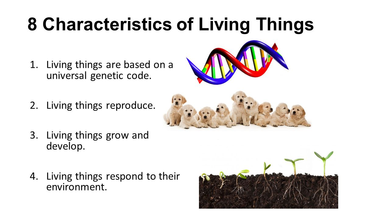 living organisms share a universal genetic What does it mean when scientists say that living organisms share a universal genetic code 2 how does a universal genetic code relate to the hypotheses about the.