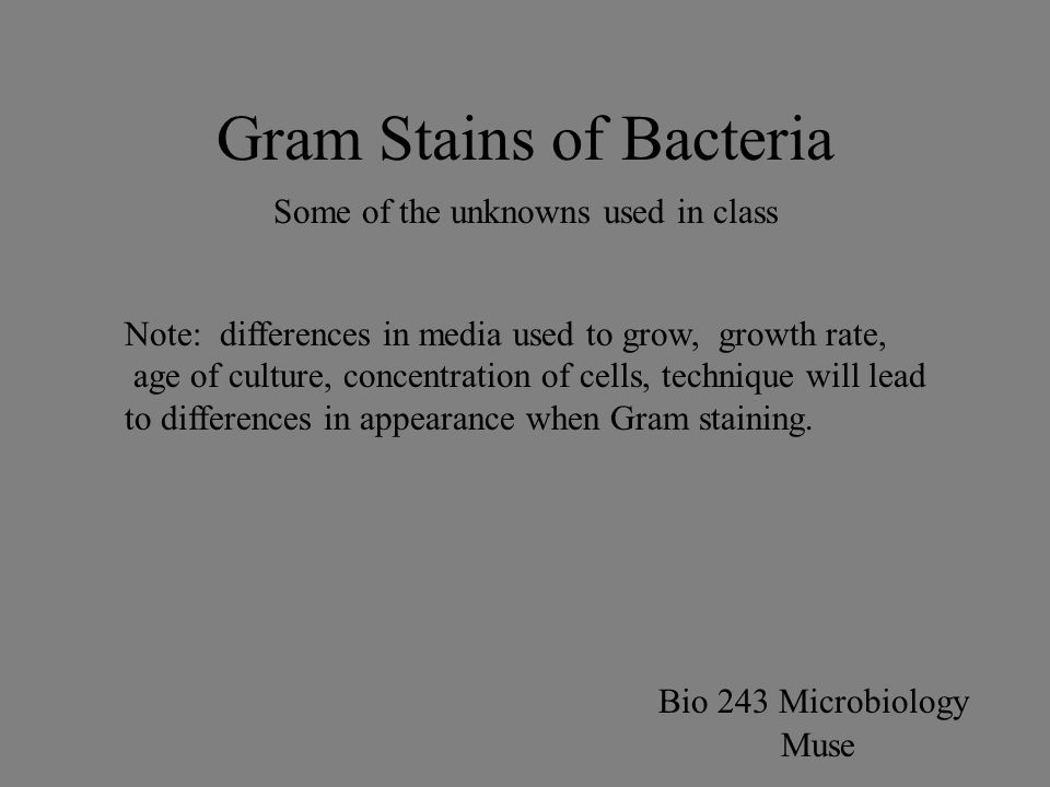 Gram Stains of Bacteria