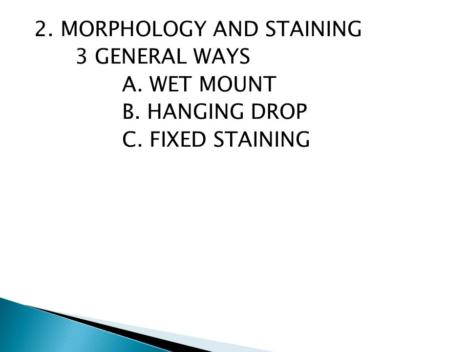 fungi morphology wet mount 344 chapter 12 bacteria, protists, and fungi what are bacteria they are found almost everywhere—in the air you breathe, in the food you eat, in the water you drink, and even deep in the.