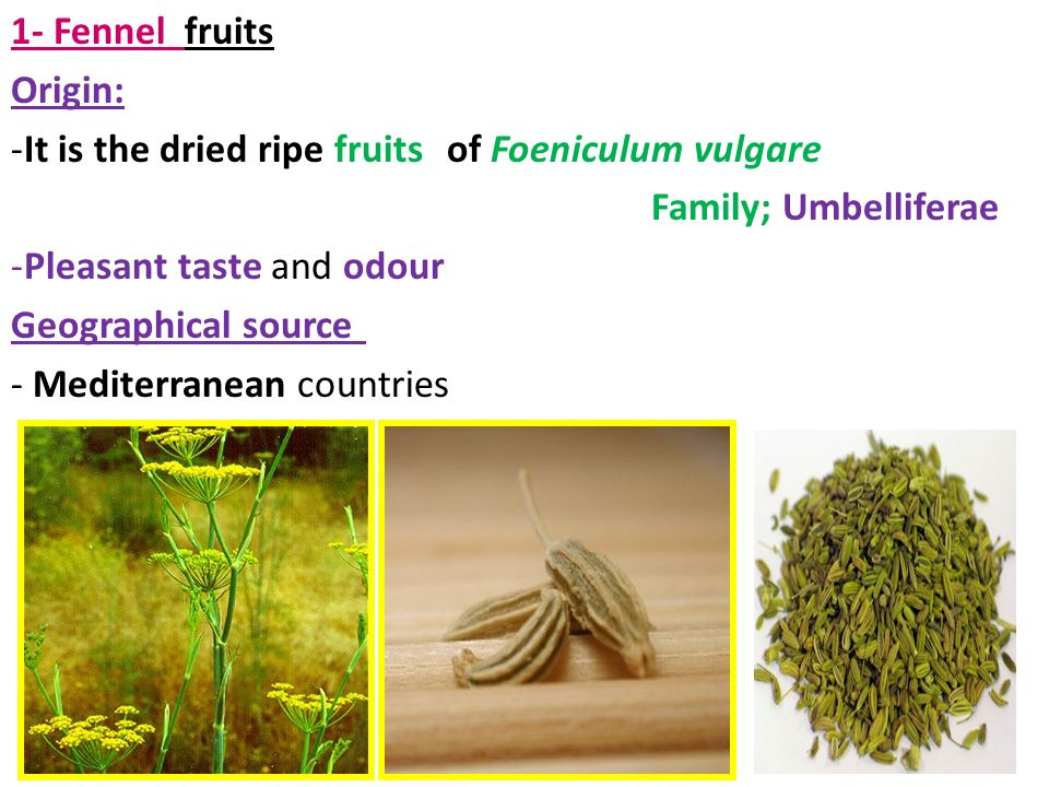 1- Fennel fruits Origin: It is the dried ripe fruits of Foeniculum vulgare. Family; Umbelliferae.