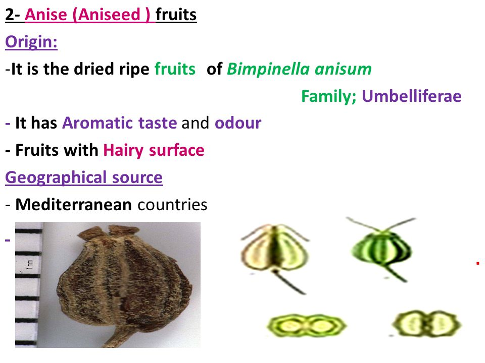 2- Anise (Aniseed ) fruits