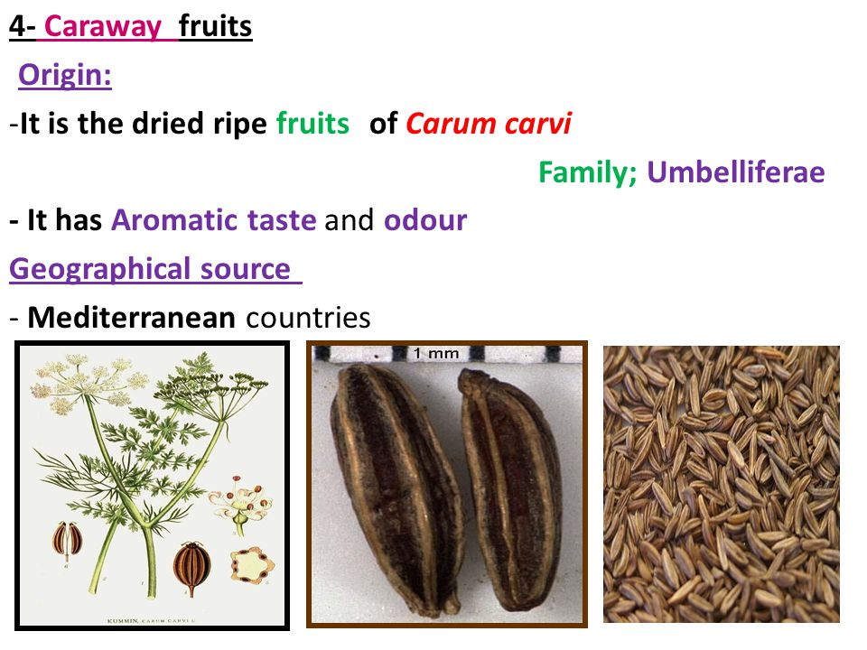 4- Caraway fruits Origin: It is the dried ripe fruits of Carum carvi. Family; Umbelliferae. - It has Aromatic taste and odour.
