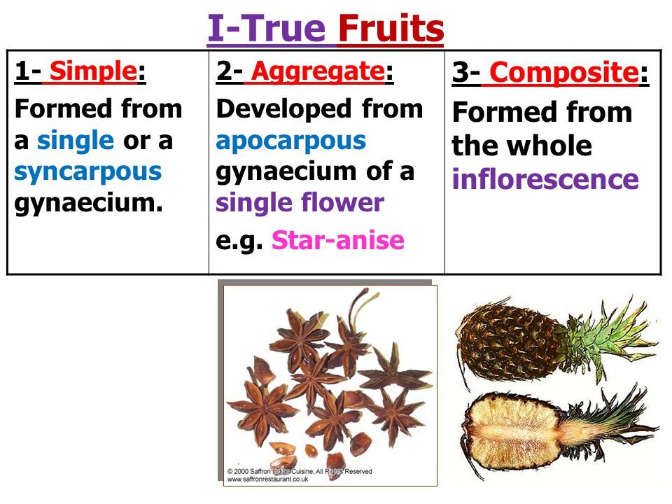 I-True Fruits 3- Composite: Formed from the whole inflorescence