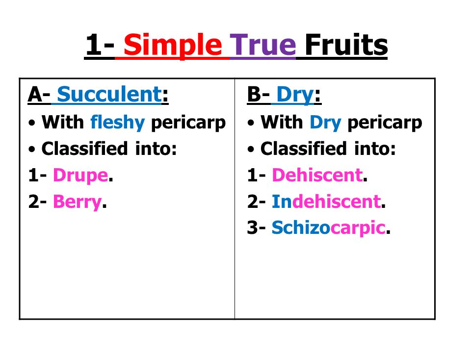 1- Simple True Fruits A- Succulent: B- Dry: With fleshy pericarp