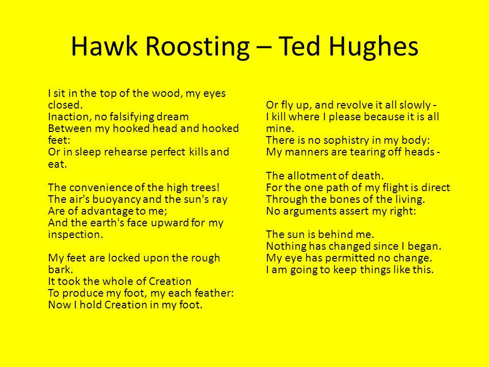 ted huges hawk roosting Hawk roosting ted hughes ted hughes (193o-1998) served as the british poet laureate from 1984 until he died, for which he received the order of merit from quee.