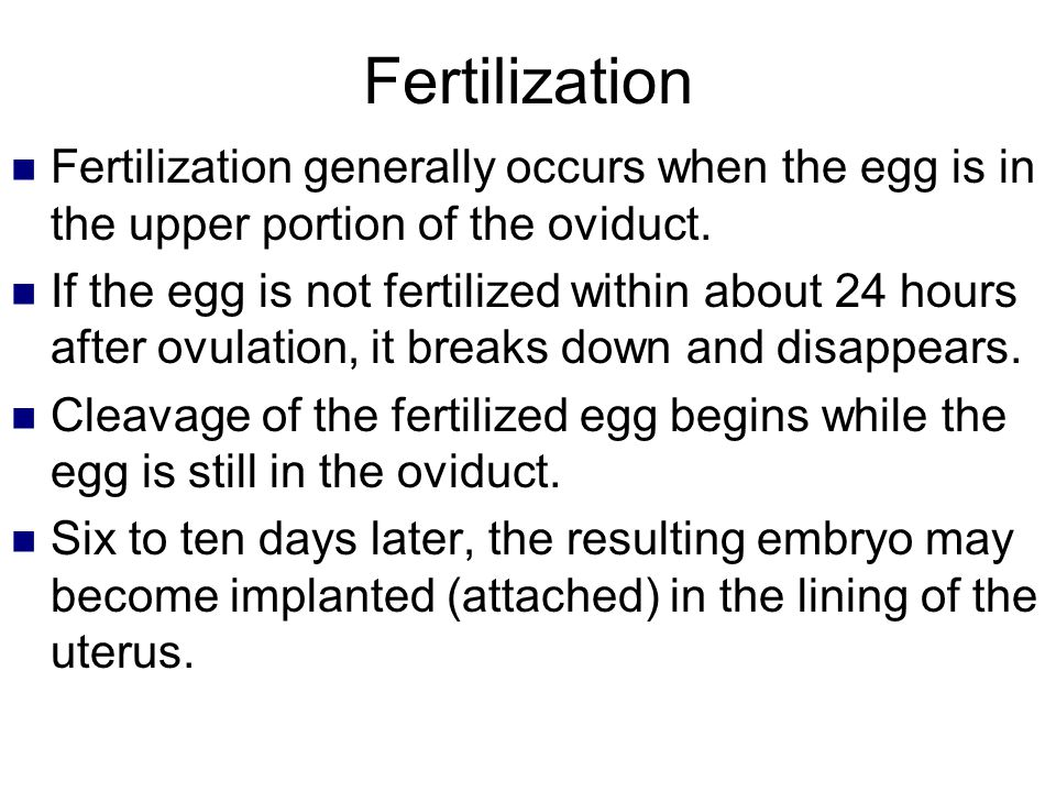 Fertilization Fertilization generally occurs when the egg is in the upper portion of the oviduct.