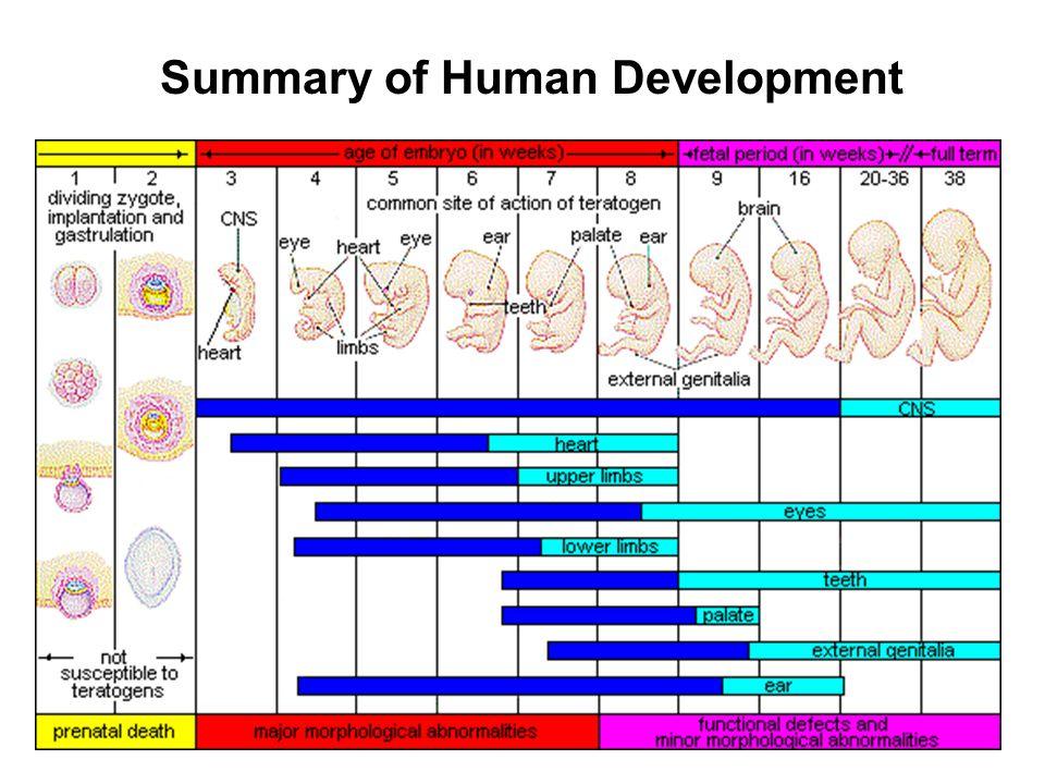 Summary of Human Development