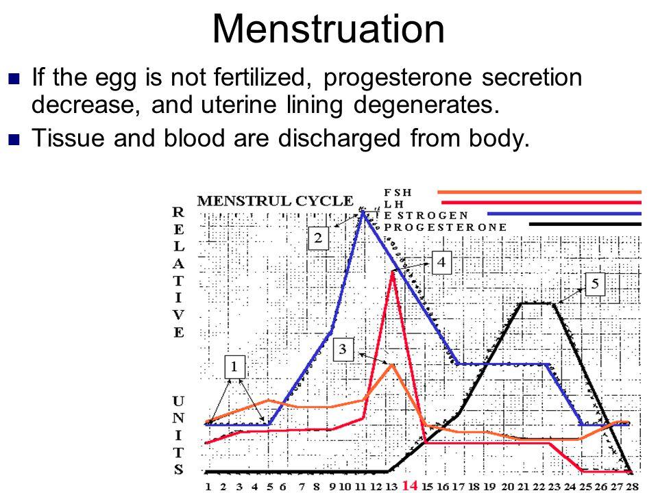 Menstruation If the egg is not fertilized, progesterone secretion decrease, and uterine lining degenerates.