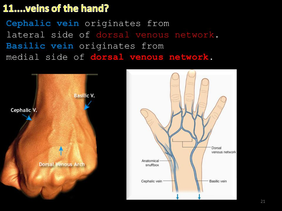 anatomy of the hand in 14 questions kaan yücel m.d., ph.d - ppt, Cephalic Vein