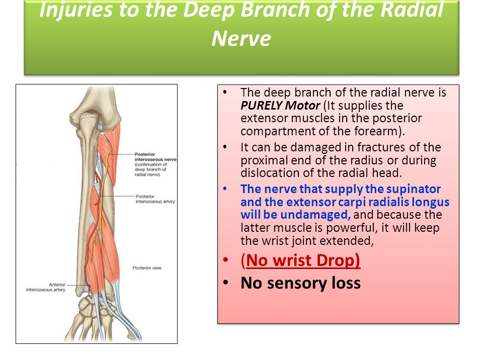 Injuries to the Deep Branch of the Radial Nerve