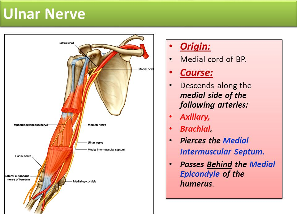 Ulnar Nerve Origin: Course: Medial cord of BP.