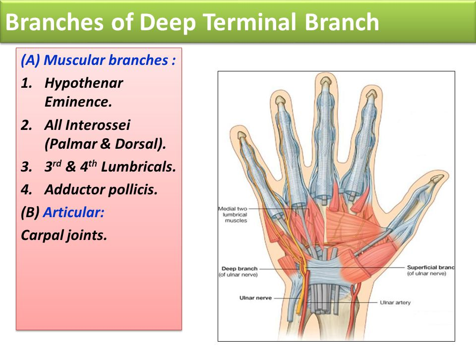 Branches of Deep Terminal Branch