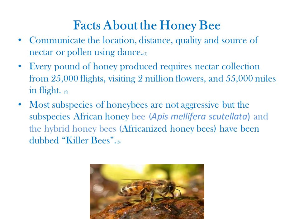 Decline of the Honey Bee TIP Group# 2 - ppt video online ... - photo#17