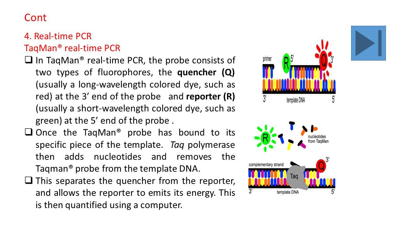 real time pcr technique pdf