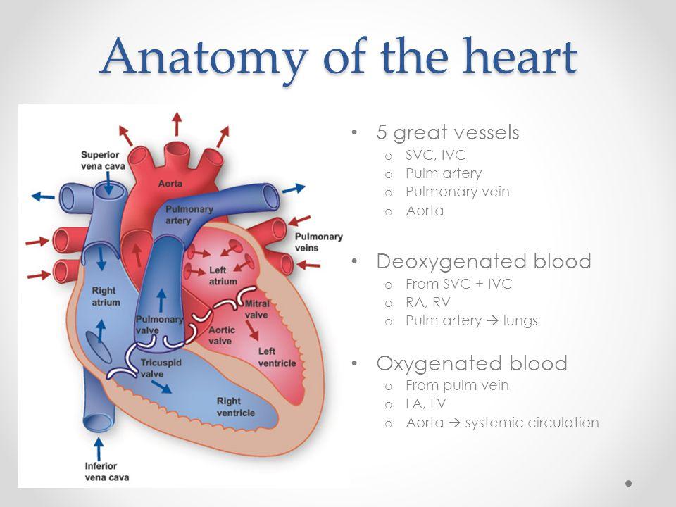 Anatomy of great vessels