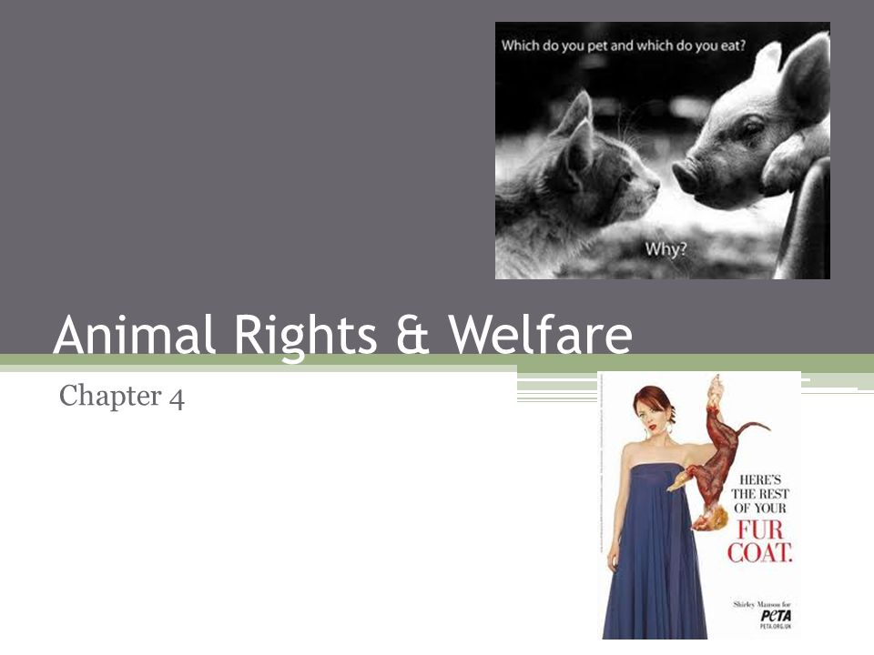 animal rights versus animal welfare Animal welfare means how an animal is coping with the conditions in which it lives an animal is in a good state of welfare if (as indicated by scientific.