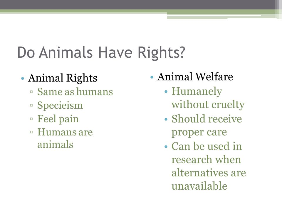 do animals deserve rights essay Animals deserve rights not abuse brandie killgore devry university animals have been seen as a lower species for decades they have little to no rights and.