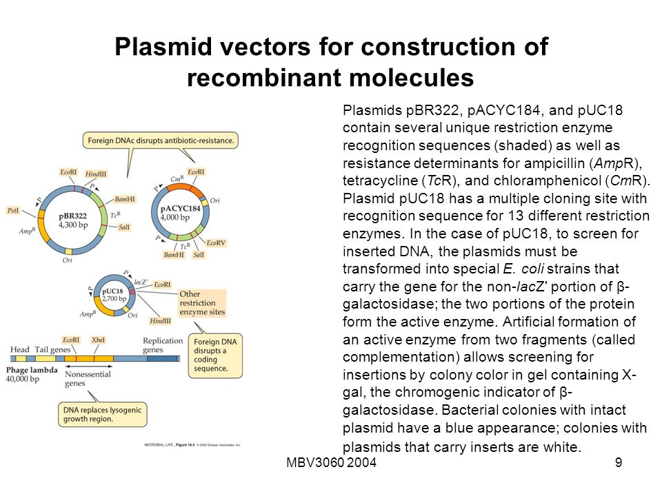 engineering a puc18 plasmid biology essay Ap® biology 2007 scoring guidelines question 4 a bacterial plasmid is 100 kb in length the plasmid dna was digested to completion with two restriction.