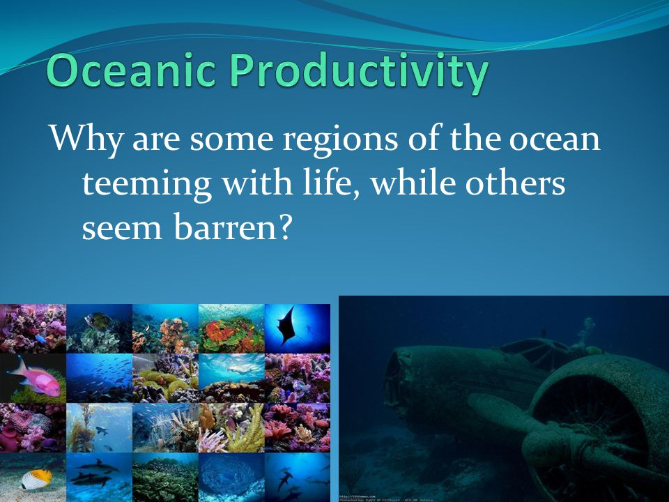 Oceanic Productivity Why are some regions of the ocean teeming with life, while others seem barren