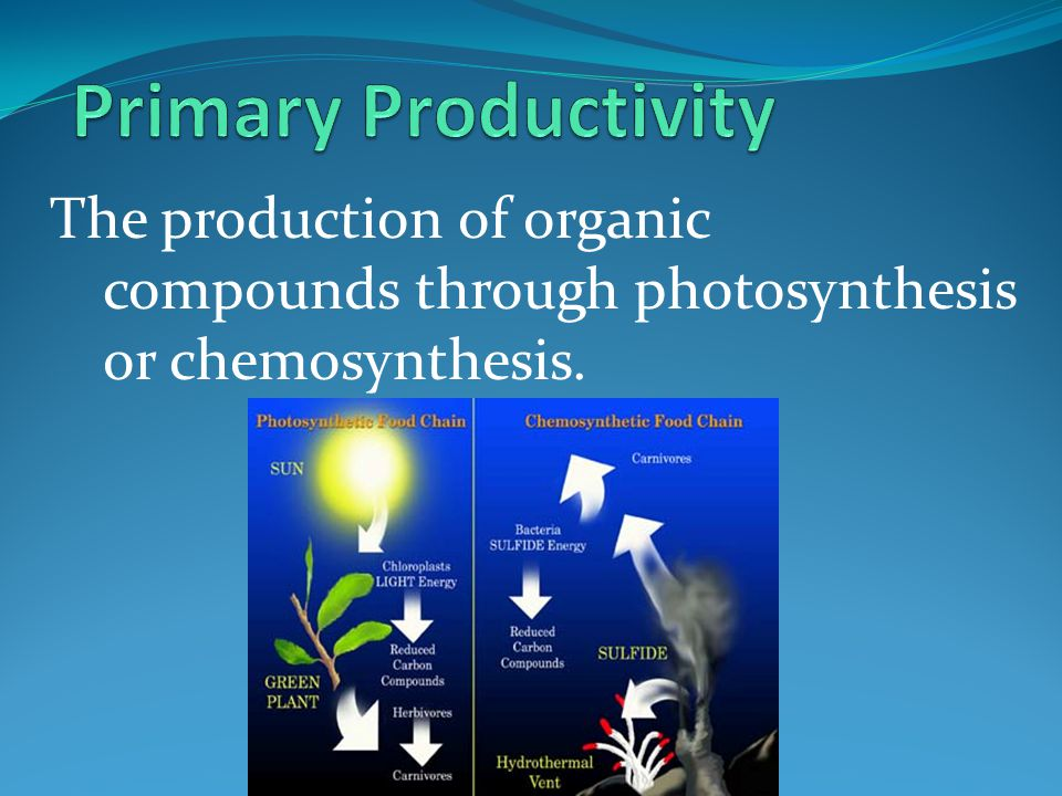 Primary Productivity The production of organic compounds through photosynthesis or chemosynthesis.