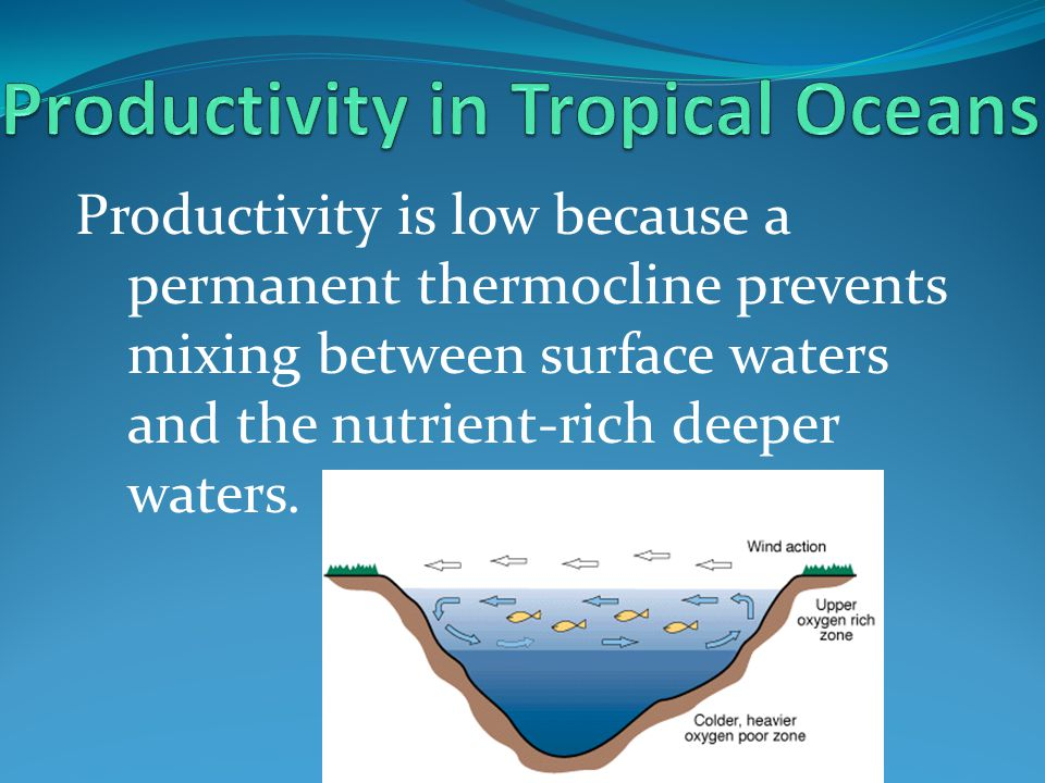 Productivity in Tropical Oceans