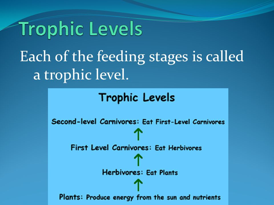 Trophic Levels Each of the feeding stages is called a trophic level.