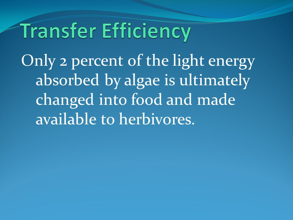 Transfer Efficiency Only 2 percent of the light energy absorbed by algae is ultimately changed into food and made available to herbivores.