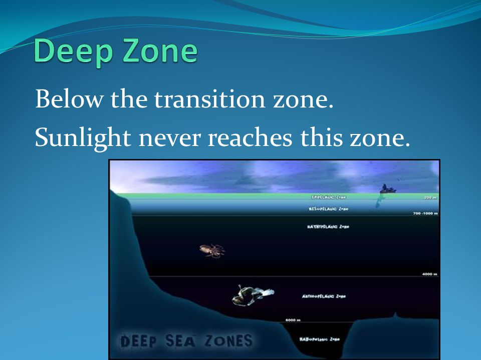 Deep Zone Below the transition zone. Sunlight never reaches this zone.