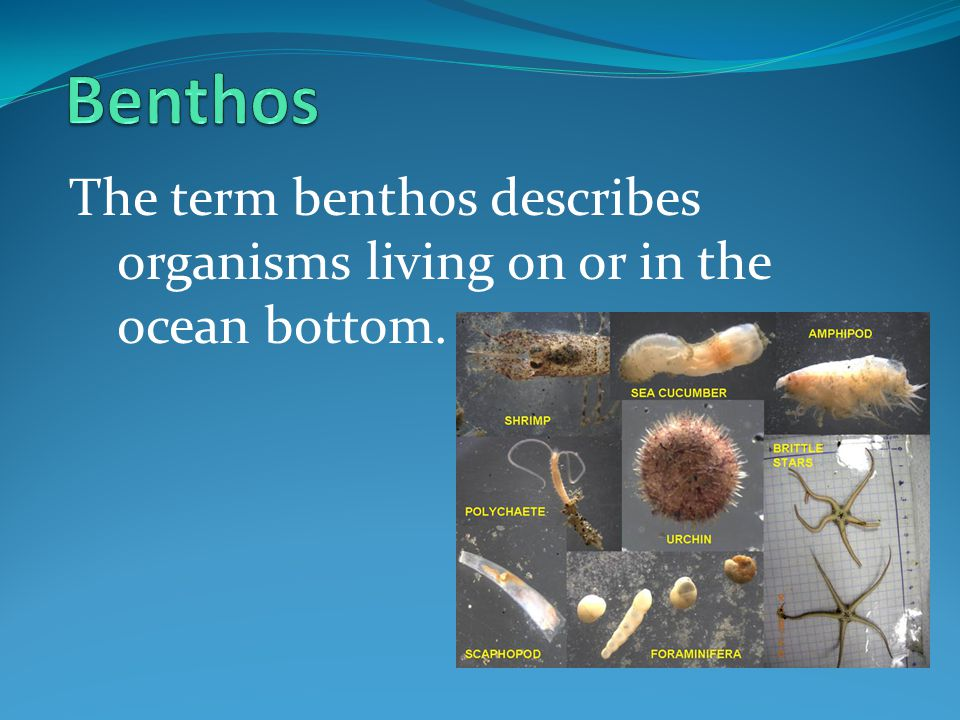 Benthos The term benthos describes organisms living on or in the ocean bottom.