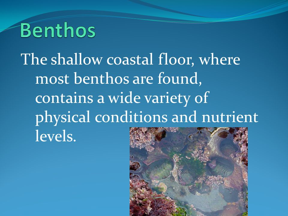 Benthos The shallow coastal floor, where most benthos are found, contains a wide variety of physical conditions and nutrient levels.