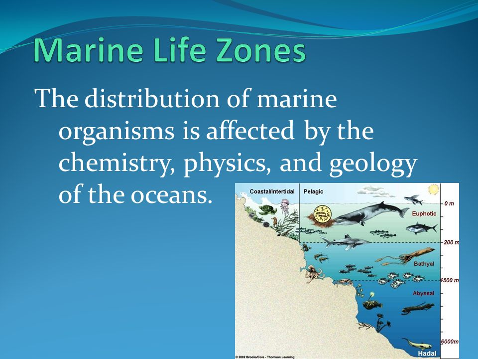 Marine Life Zones The distribution of marine organisms is affected by the chemistry, physics, and geology of the oceans.