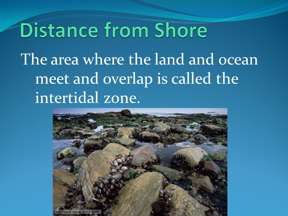Distance from Shore The area where the land and ocean meet and overlap is called the intertidal zone.