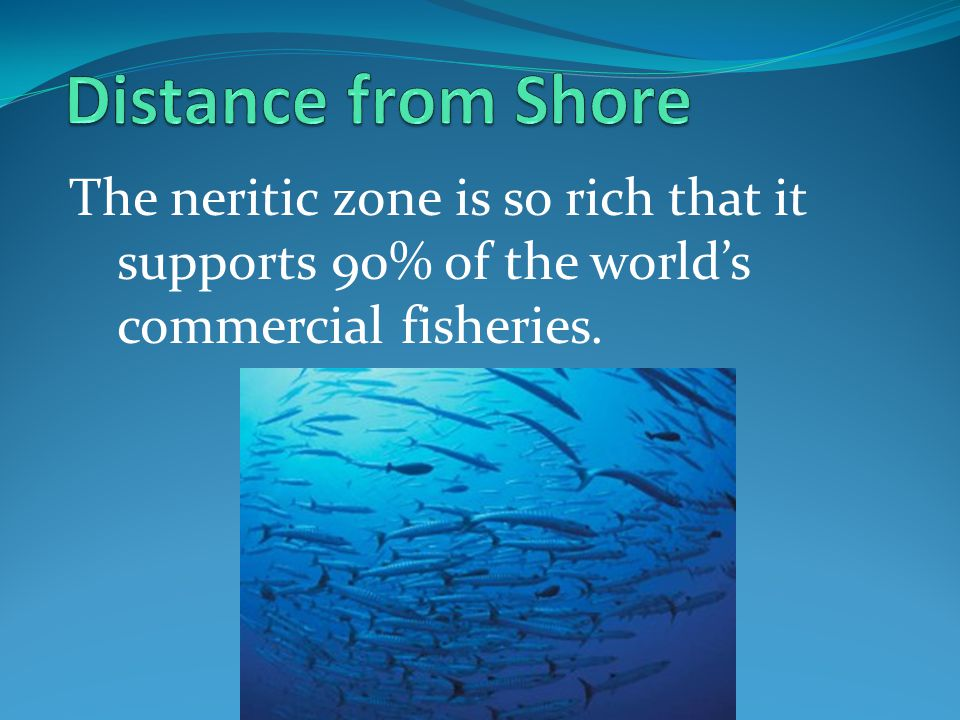 Distance from Shore The neritic zone is so rich that it supports 90% of the world's commercial fisheries.