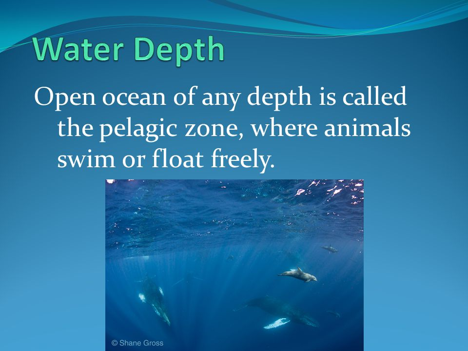 Water Depth Open ocean of any depth is called the pelagic zone, where animals swim or float freely.