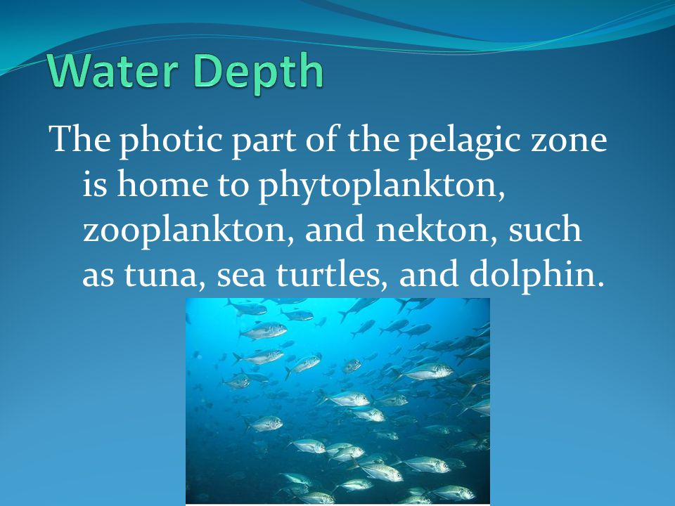 Water Depth The photic part of the pelagic zone is home to phytoplankton, zooplankton, and nekton, such as tuna, sea turtles, and dolphin.